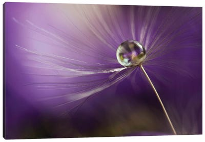 In Shades Of Purple Canvas Art Print