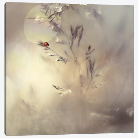 Little Lady Canvas Print #OXM3545} by Heidi Westum Art Print