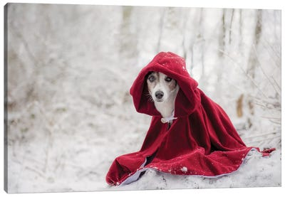 Little Red Riding Hood In Winter Canvas Art Print