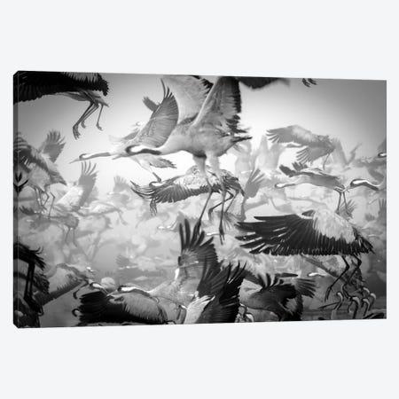 Chaos Canvas Print #OXM3574} by Ido Meirovich Canvas Art