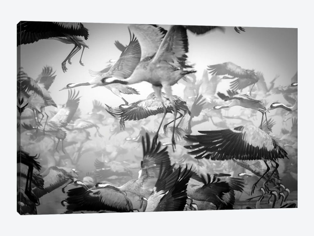 Chaos by Ido Meirovich 1-piece Canvas Art