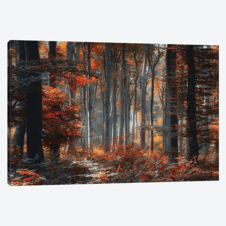 Painting Forest Canvas Print #OXM3579} by Ildiko Neer Canvas Print