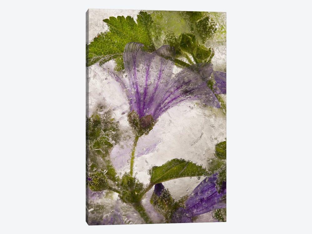 Frozen Mallow Flower by Secundino Losada 1-piece Canvas Print