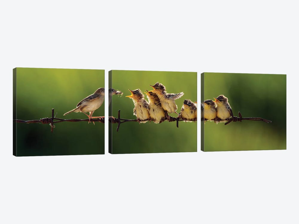 16 by Iwan Tirtha 3-piece Canvas Print