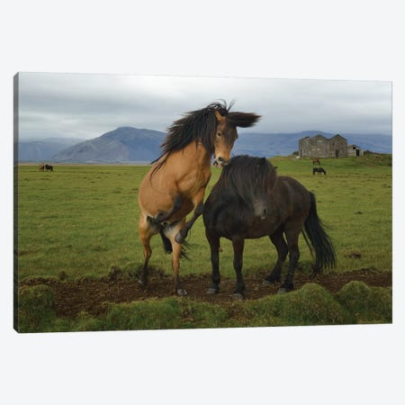 Wild Horses Canvas Print #OXM3593} by Izidor Gasperlin Canvas Print