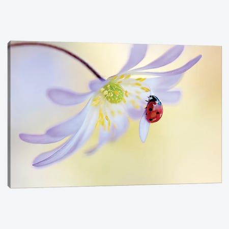 Anemone Lady Canvas Print #OXM3597} by Jacky Parker Canvas Wall Art