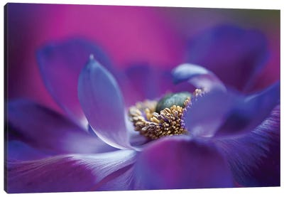 Windflower I Canvas Art Print