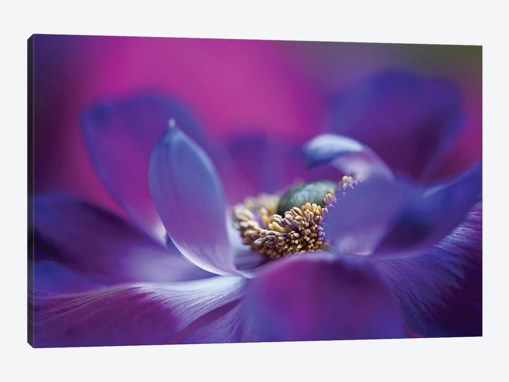 Windflower I 1-piece Canvas Print
