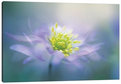 Windflower II Canvas Art Print