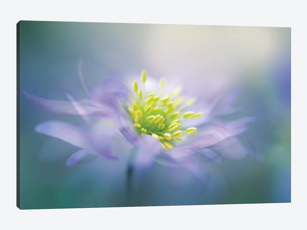 Windflower II by Jacky Parker 1-piece Art Print