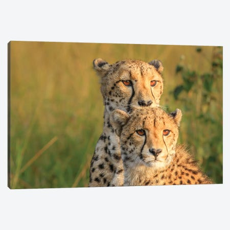 Double Team Canvas Print #OXM3601} by Jaco Marx Canvas Print