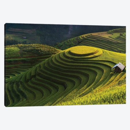 Gold Rice Terrace In Mu Cang Chai, Vietnam Canvas Print #OXM3605} by Jakkree Thampitakkull Canvas Art