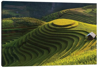 Gold Rice Terrace In Mu Cang Chai, Vietnam Canvas Art Print