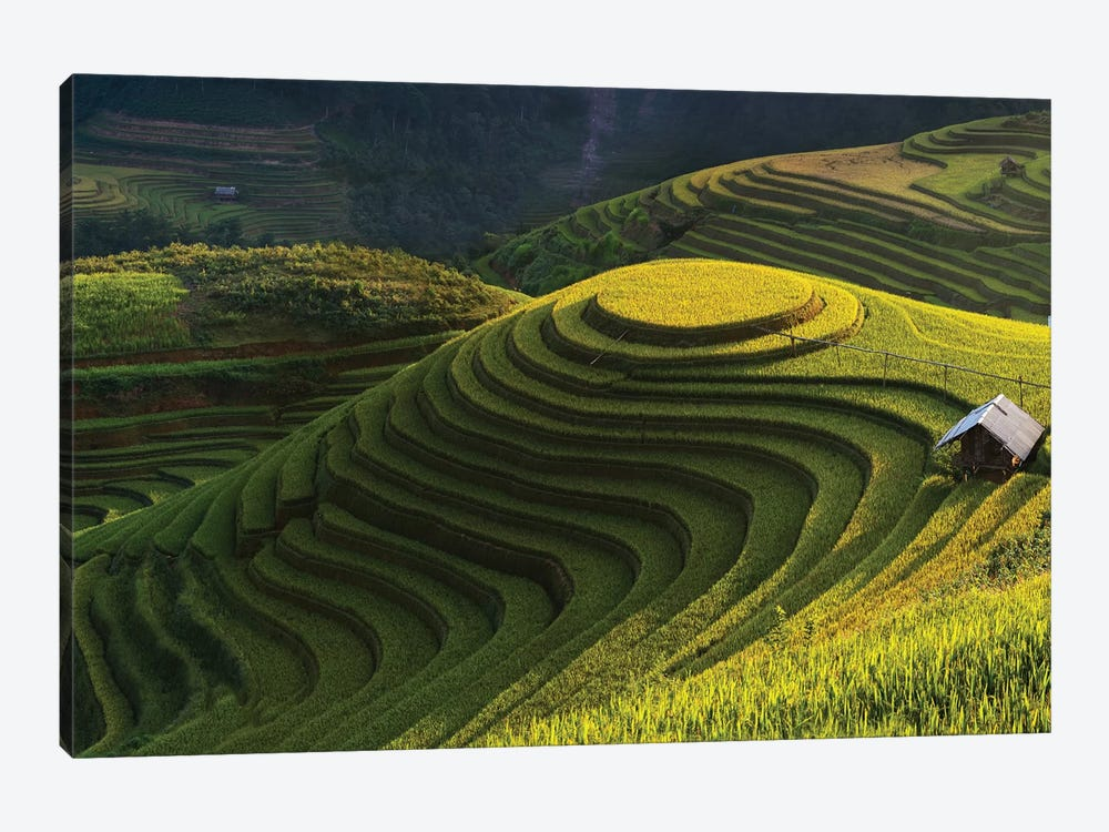 Gold Rice Terrace In Mu Cang Chai, Vietnam by Jakkree Thampitakkull 1-piece Canvas Artwork