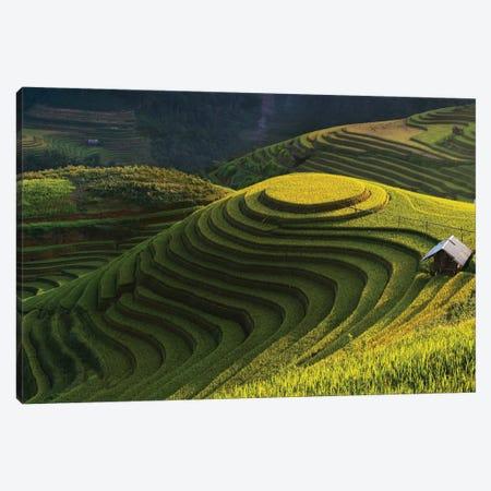 Gold Rice Terrace In Mu Cang Chai, Vietnam Canvas Print #OXM3605} by Jakkree Thampitakkull Canvas Art
