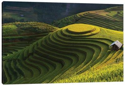 Gold Rice Terrace In Mu Cang Chai, Vietnam Canvas Art Print