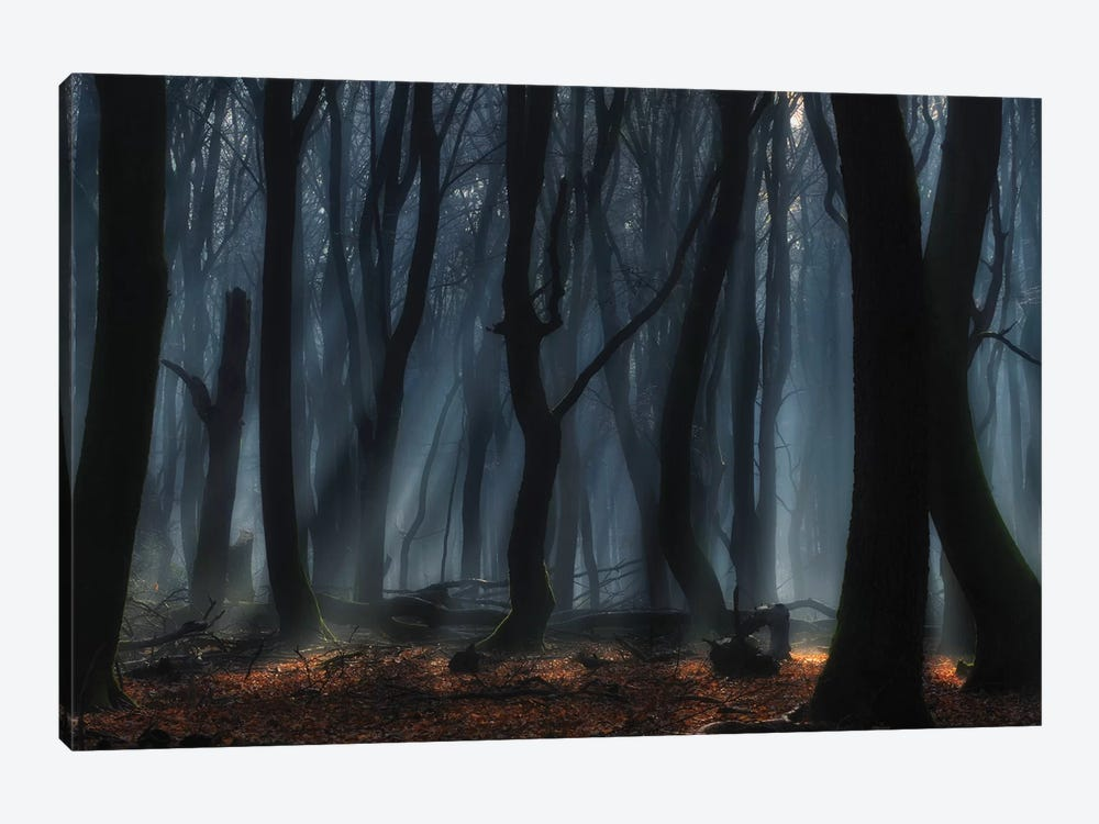 Dancing Trees by Jan Paul Kraaij 1-piece Canvas Artwork