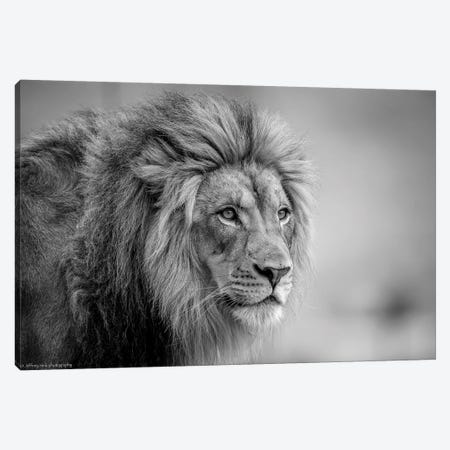 His Majesty.... Canvas Print #OXM3627} by Jeffrey C. Sink Canvas Art