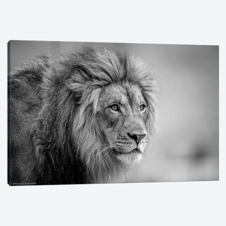 His Majesty.... Canvas Print #OXM3627} by Jeffrey C. Sink Canvas Art
