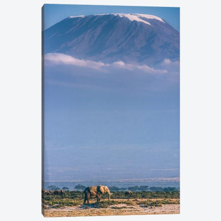 Kilimanjaro And The Quiet Sentinels Canvas Print #OXM3628} by Jeffrey C. Sink Art Print