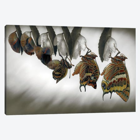 Emergence Canvas Print #OXM3646} by Jimmy Hoffman Canvas Art