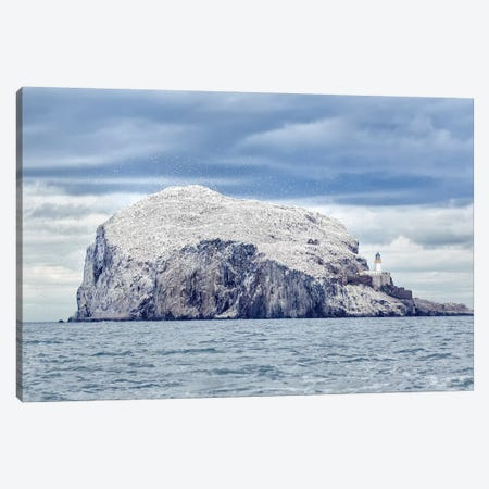Bass Rock Canvas Print #OXM3648} by Joan Gil Raga Canvas Art Print