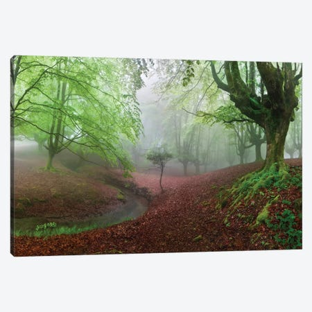 The Forest Maravillador III Canvas Print #OXM3670} by Juan Pixelecta Canvas Artwork
