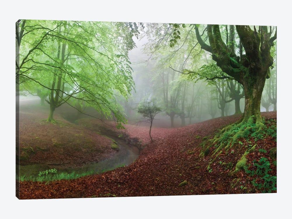 The Forest Maravillador III by Juan Pixelecta 1-piece Canvas Artwork