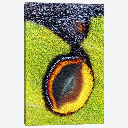Eyespot Canvas Print #OXM367} by Jimmy Hoffman Canvas Artwork