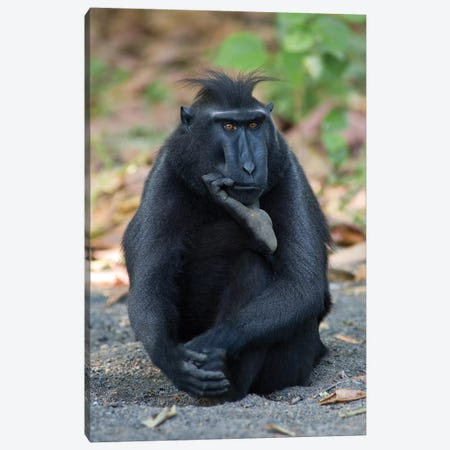 The Thinker Canvas Print #OXM3685} by Karsten Wrobel Canvas Wall Art