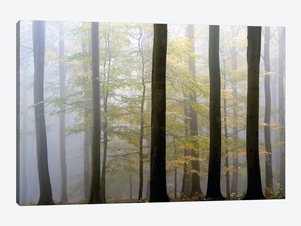 In Between by keller 1-piece Canvas Art