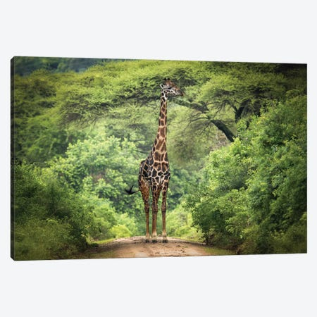 Unexpected Meeting Canvas Print #OXM3702} by Kirill Trubitsyn Canvas Artwork