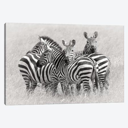 Zebras Canvas Print #OXM3703} by Kirill Trubitsyn Canvas Wall Art