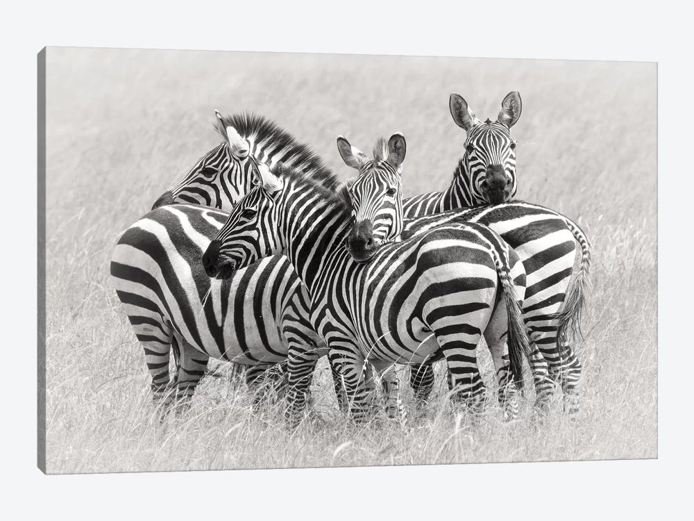 Zebras by Kirill Trubitsyn 1-piece Canvas Art Print