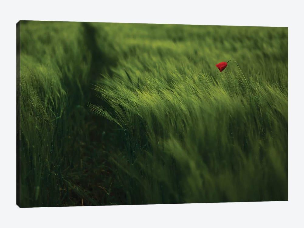 In The Wind by Kovop 1-piece Canvas Wall Art