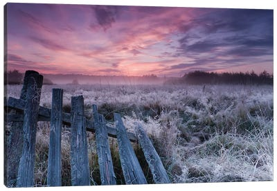 Dawn Of Bialowieza Meadows Canvas Art Print