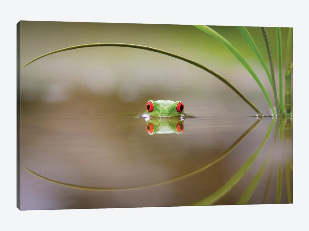 Beauty Of Reflection by Kutub Uddin 1-piece Canvas Wall Art