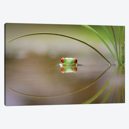 Beauty Of Reflection Canvas Print #OXM3719} by Kutub Uddin Canvas Print