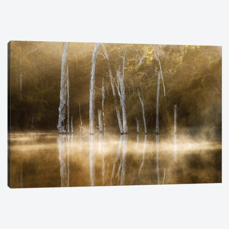 Karri Valley Canvas Print #OXM3726} by Leah Kennedy Art Print