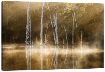 Karri Valley Canvas Art Print