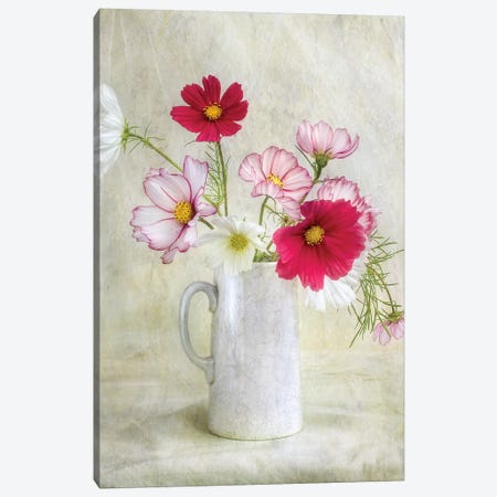 Cosmos Carnival Canvas Print #OXM3765} by Mandy Disher Art Print