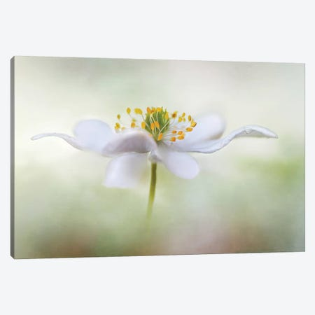 Nemorosa* Canvas Print #OXM3766} by Mandy Disher Art Print