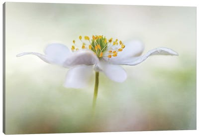 Nemorosa* Canvas Art Print