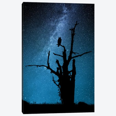 Alone In The Dark Canvas Print #OXM3770} by Manu Allicot Canvas Print
