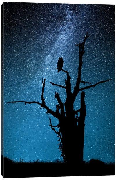 Alone In The Dark Canvas Art Print