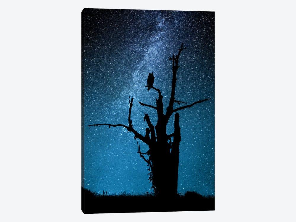 Alone In The Dark by Manu Allicot 1-piece Art Print