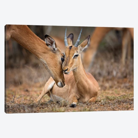 A Moment Of Love Canvas Print #OXM3789} by Mario Moreno Canvas Wall Art