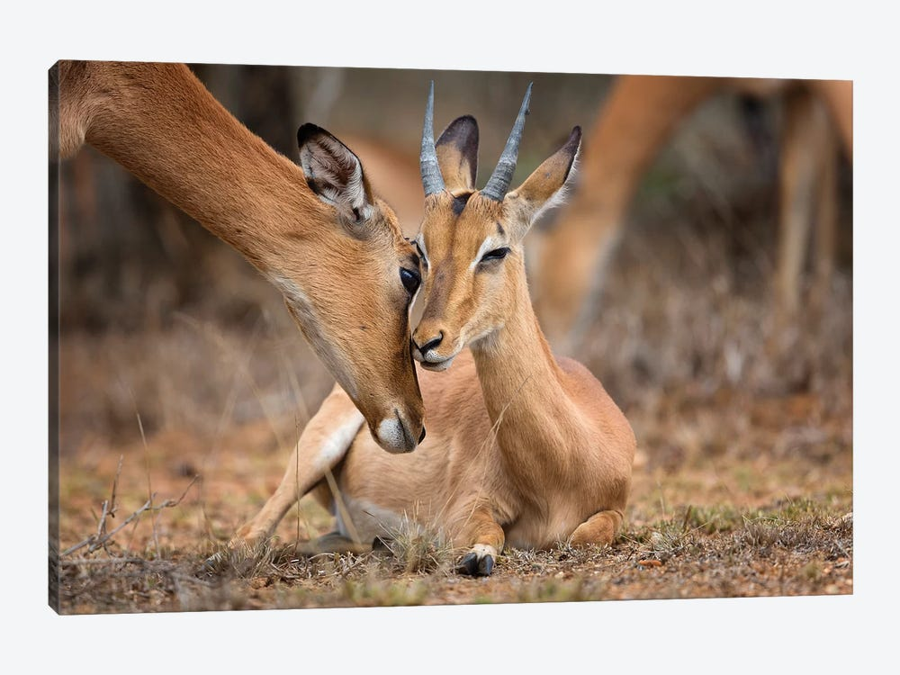 A Moment Of Love by Mario Moreno 1-piece Canvas Print