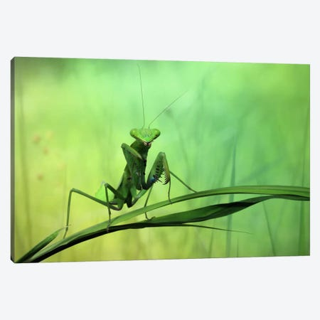 Hi There! Canvas Print #OXM378} by Jimmy Hoffman Canvas Wall Art