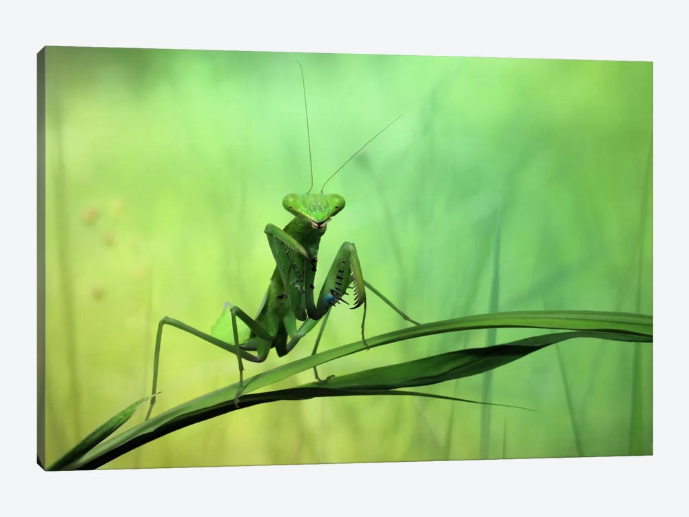 Hi There! by Jimmy Hoffman 1-piece Canvas Art